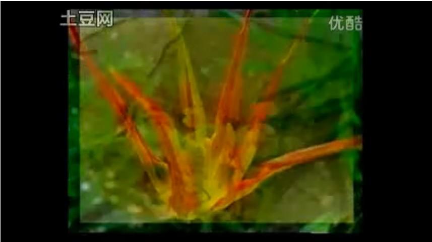 盆栽仙人掌和仙人球
